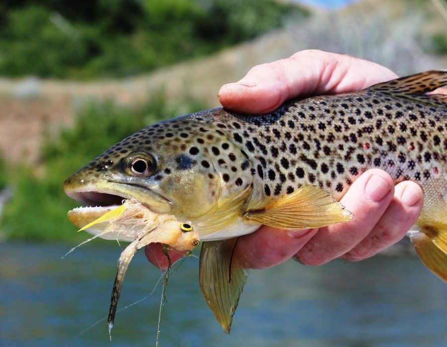 Montana Bighorn River Fishing Lodge