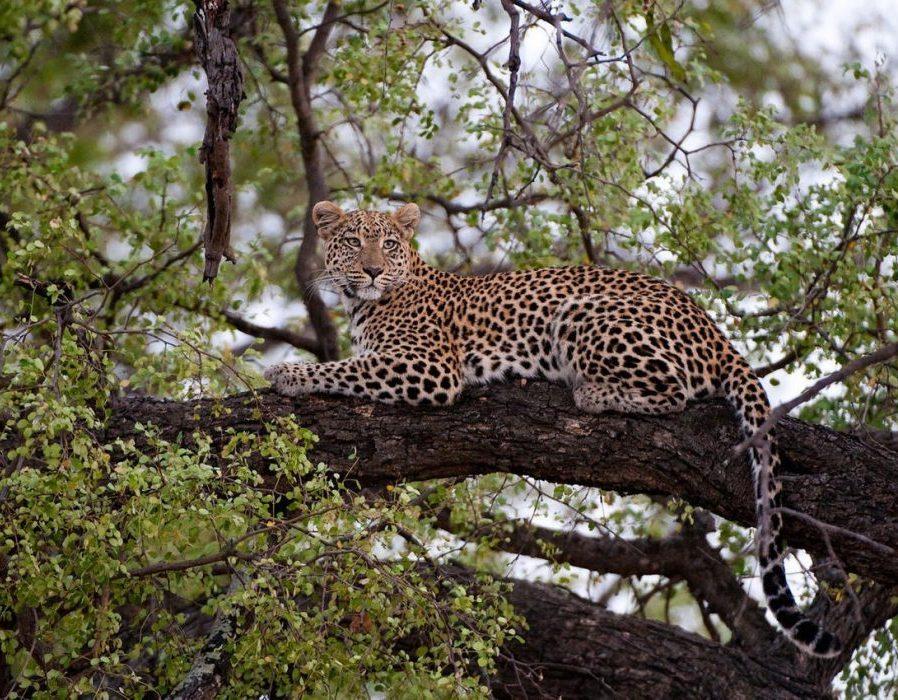 Okavango Delta Photo Safari