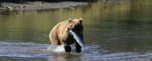 Alaska Kenai Adventure