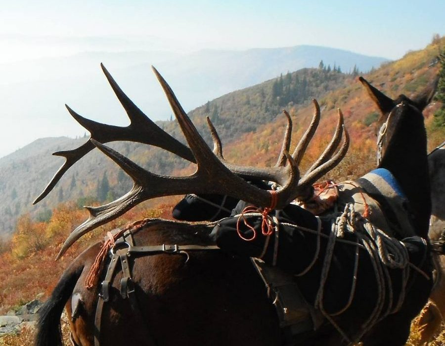 Idaho Big Game Hunting
