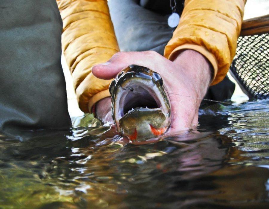 Montana Fly Fishing Lodge – Bozeman