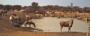 Namibia Luxury Hunting Safari