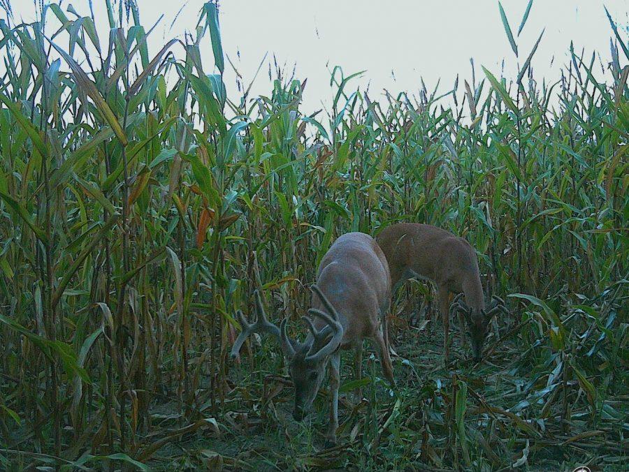 Kansas Trophy Whitetail Bow Hunt