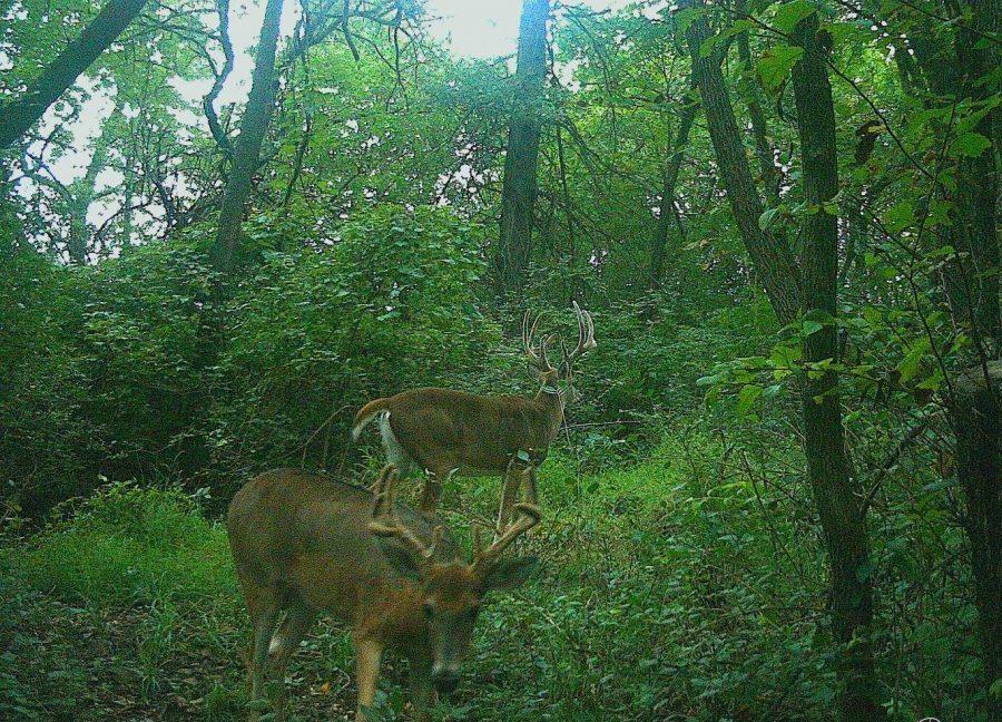 Kansas Deer Hunt - Southeast