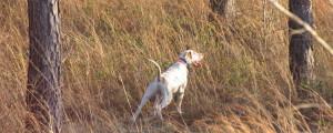 Alabama Quail Hunting, Deer, Turkey Southeast