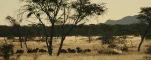 Namibia Hunting Safari Tent Camp