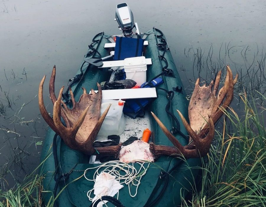Alaska Moose and Bear Hunt - Dillingham