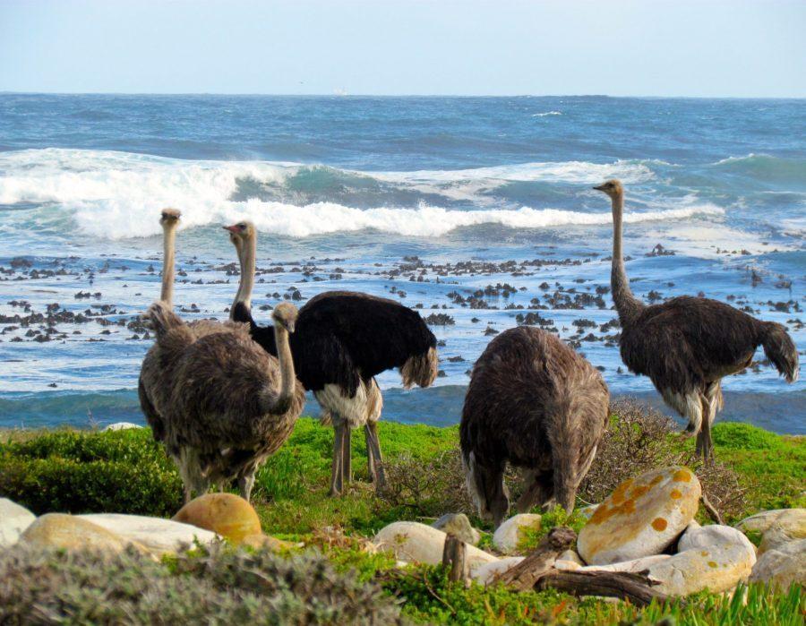 Cape Town to Kruger Photo Safari