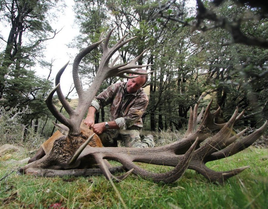New Zealand Red Stag Hunting - Christchurch