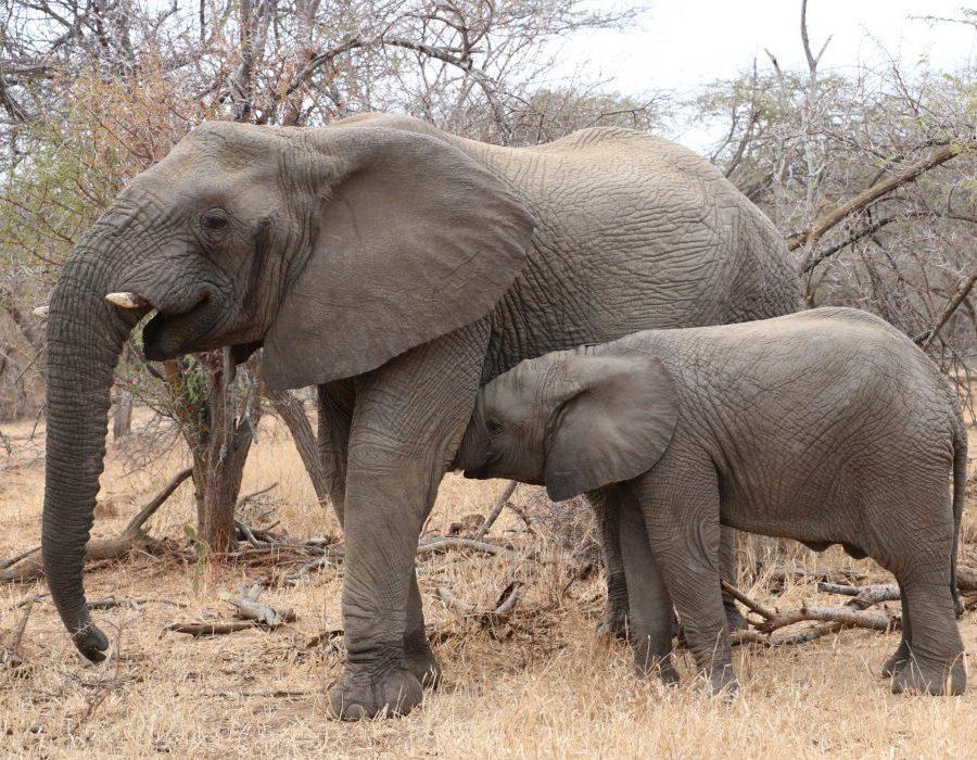 South Africa Kruger Photo Safari