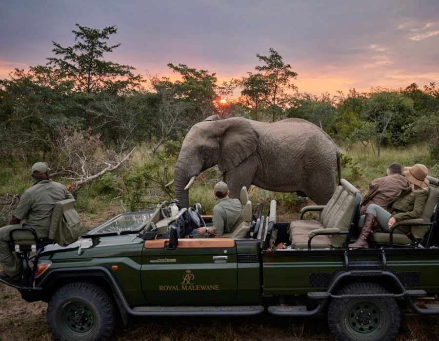 The Ultimate Luxury Photo Safari