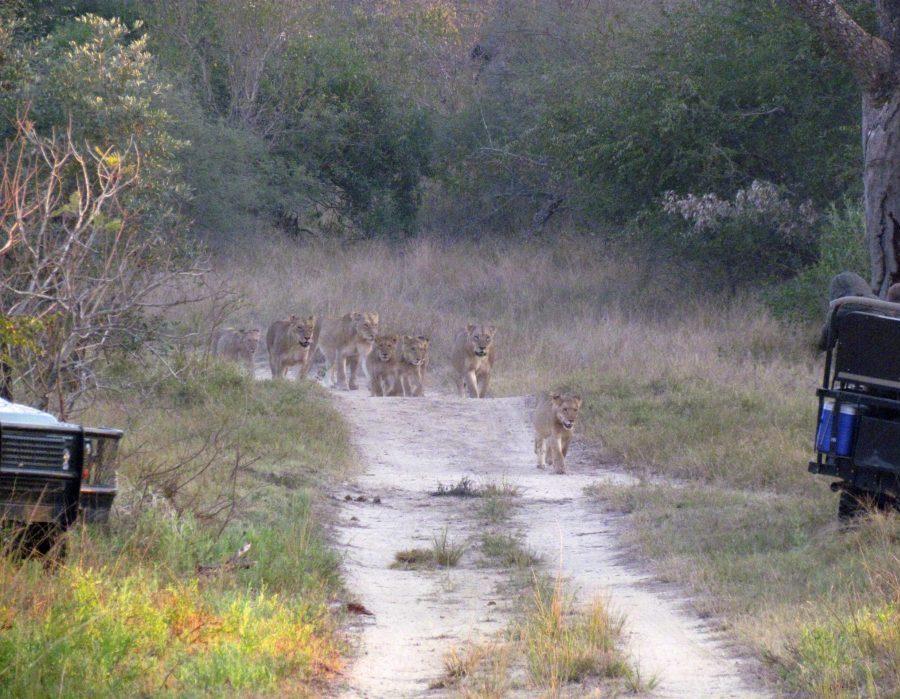 South Africa Garden Route & Photo Safari