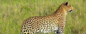 South Africa Eastern Cape Photo Safari