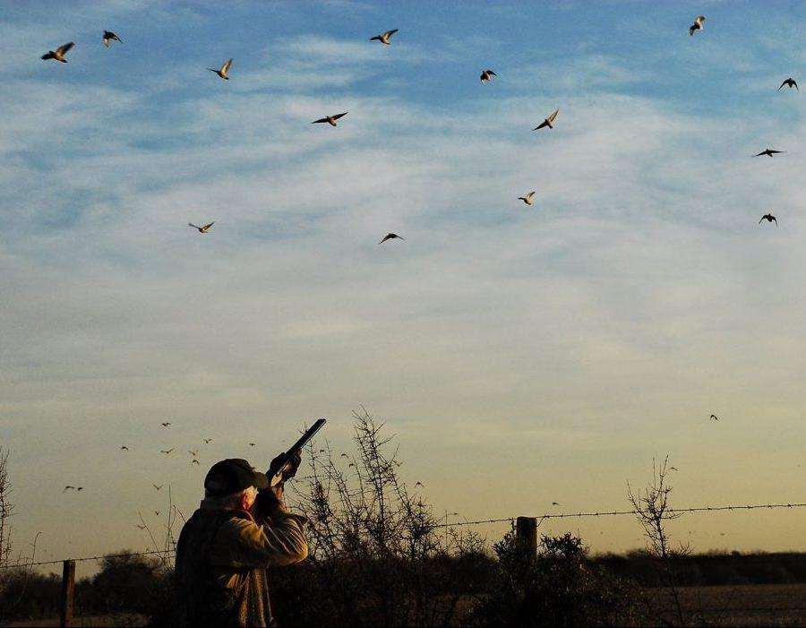 Uruguay bird hunting