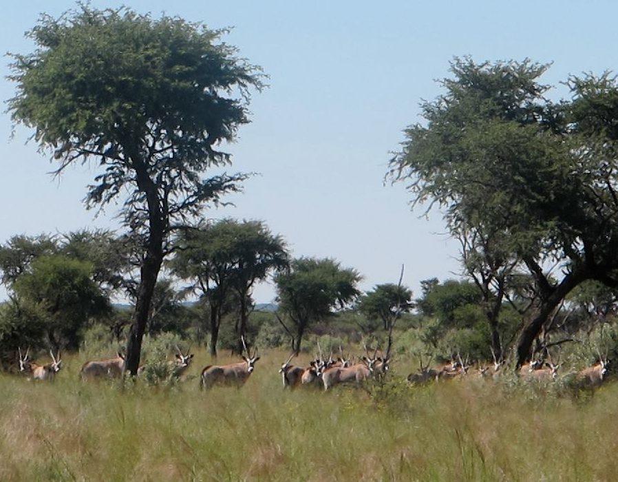 Namibia Hunting Safari - Lake Lodge