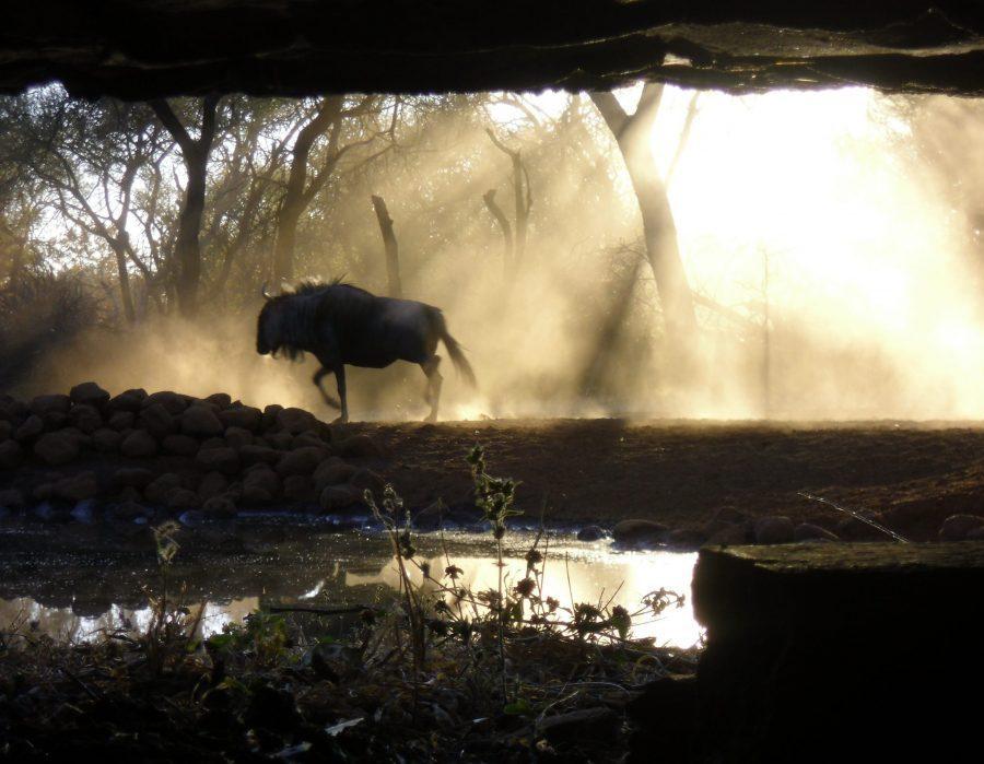 Zimbabwe Hunting Safari