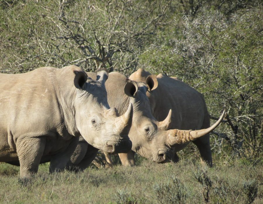 South Africa Hunting Safari - South Central