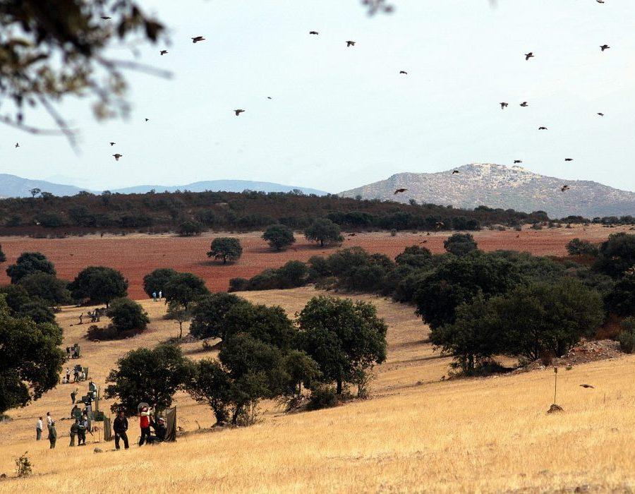 Spain Driven Bird Hunt