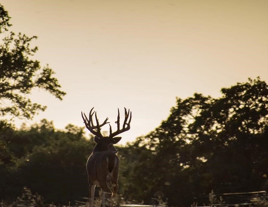 Texas Trophy Hunting - Brownwood