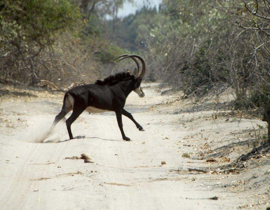 Namibia Dangerous Game Safari - Caprivi Strip