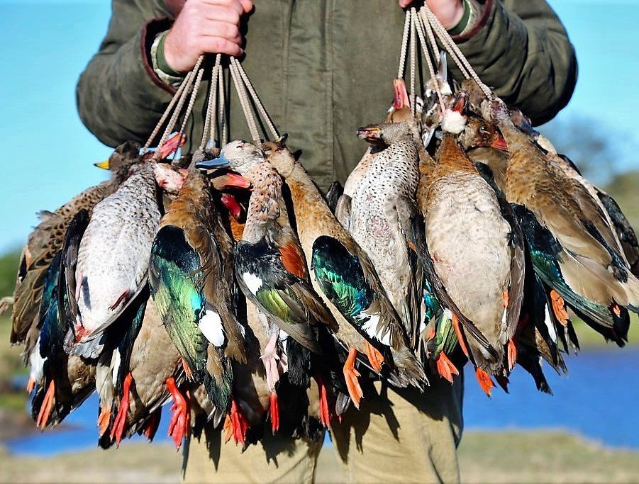 Argentina Mixed Bag Wingshooting - Buenos Aires