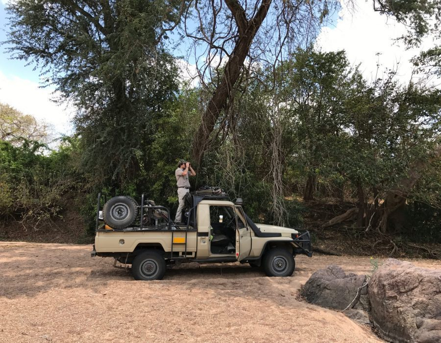 Mozambique Hunting Safari