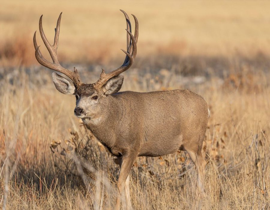 Colorado Elk Hunt and Mule Deer Hunt - Meeker