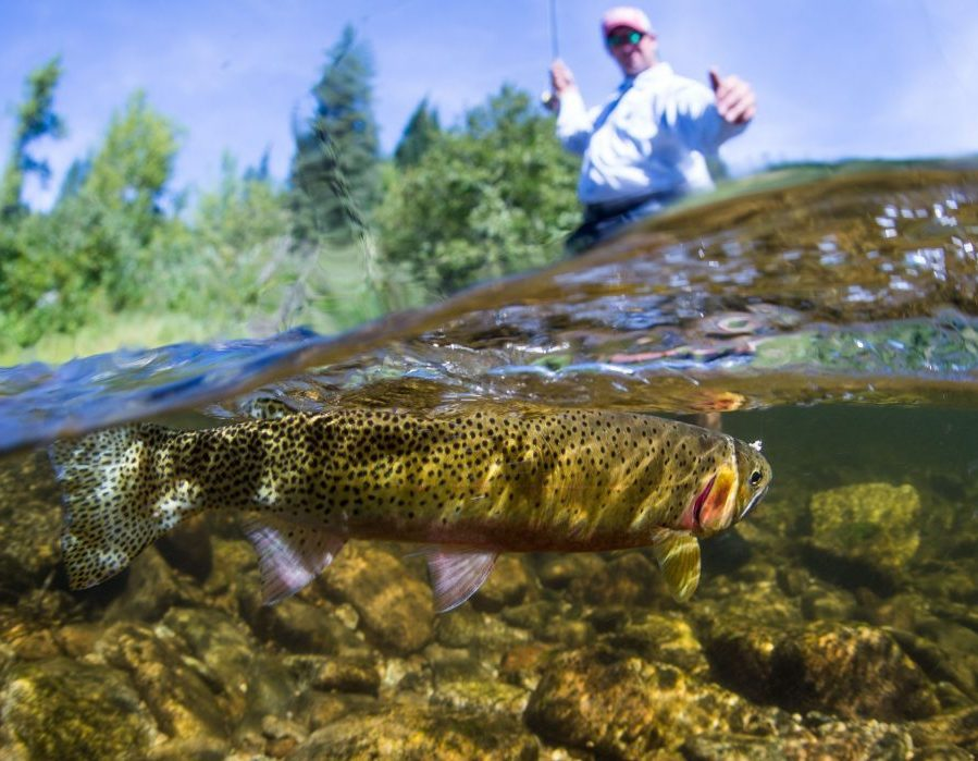 Idaho Back Country Fly Fishing