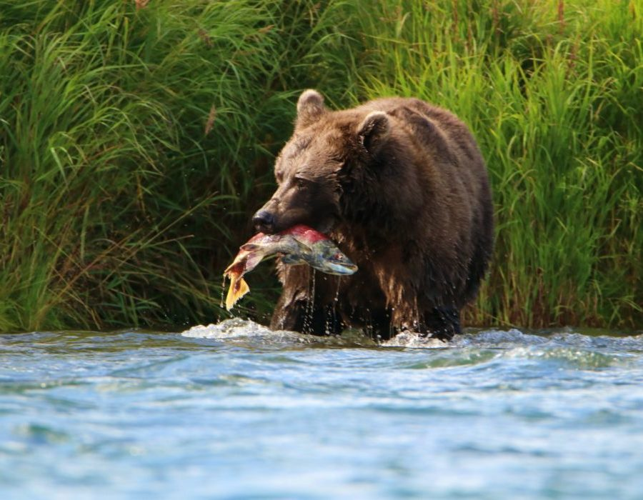 Alaska Fly Fishing Lodge - Katmai